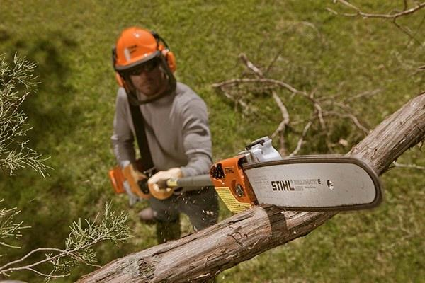 Rent Pole Saw, Pruner